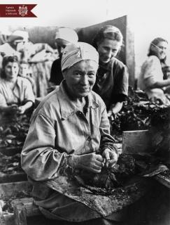 S. Corgevscaia,  muncitoare la  Fabrica de tutun din or. Chișinău, anul 1947, Indice: 1723, Autor - N. Maiorov